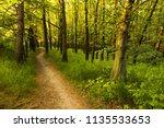 a path through fresh green... | Shutterstock . vector #1135533653