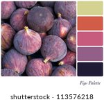 Fresh fig background colour palette with complimentary swatches. - stock photo