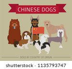 dogs by country of origin.... | Shutterstock .eps vector #1135793747
