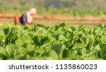 tobacco with farmers | Shutterstock . vector #1135860023