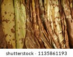 dry tobacco in the store | Shutterstock . vector #1135861193