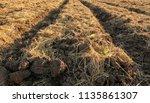 soil for planting | Shutterstock . vector #1135861307