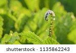herbal a shampoo | Shutterstock . vector #1135862243