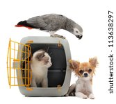 Cat Closed Inside Pet Carrier ...