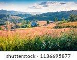 sunny morning scene of rogojel...   Shutterstock . vector #1136695877