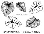 collection set of tropical leaf ... | Shutterstock .eps vector #1136745827