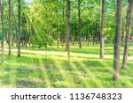 beautiful sunny park with light ... | Shutterstock . vector #1136748323