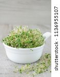 fast growing micro greens  for... | Shutterstock . vector #1136955107