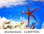 Starfish on a blue background under the sea - stock photo