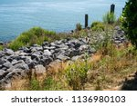 shore with wild flowers ... | Shutterstock . vector #1136980103