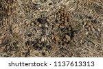 healthy wild rabbit feces ... | Shutterstock . vector #1137613313