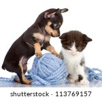 Stock photo the puppy consoles a kitten isolated on white background 113769157