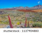 teide national park on a sunny... | Shutterstock . vector #1137904883