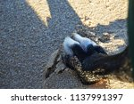 dog's paw on the beach | Shutterstock . vector #1137991397