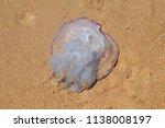 jellyfish rhizostoma root rope  ... | Shutterstock . vector #1138008197