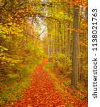 road in the forest in autumn | Shutterstock . vector #1138021763