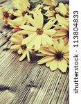 wild yellow daisy flowers on... | Shutterstock . vector #113804833