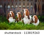 Group Of Four Dogs Basset Houn...