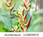 bird | Shutterstock . vector #113839873