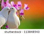 two loving white doves and... | Shutterstock . vector #113848543