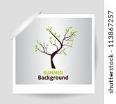 summer photo frame. green tree. ... | Shutterstock .eps vector #113867257