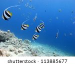 under sea view with the flying... | Shutterstock . vector #113885677