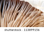 delicious mushrooms texture, extreme closeup photo - stock photo
