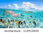 Colorful fish, stingray and black tipped sharks underwater in Bora Bora lagoon - stock photo