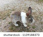 cute small rabbits | Shutterstock . vector #1139188373
