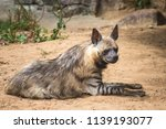 the hyena is a hunter of the... | Shutterstock . vector #1139193077