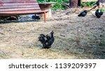 farm animals  goat  turkey ... | Shutterstock . vector #1139209397