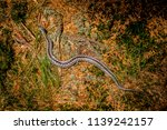 young vipera berus caught on a... | Shutterstock . vector #1139242157