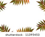 six red and green rowan leaves... | Shutterstock . vector #11395453