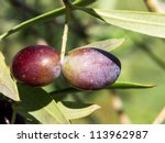 black olives on the branch - stock photo