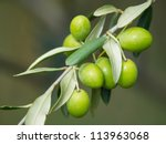 branch of the green olives on the olive tree - stock photo