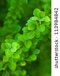 Fresh green leaves on a blurred background - stock photo