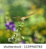 dragonfly in the nature | Shutterstock . vector #1139960783