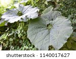natural woodland for background  | Shutterstock . vector #1140017627