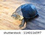 small turtle in grass outdoor.... | Shutterstock . vector #1140116597