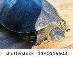 small turtle in grass outdoor.... | Shutterstock . vector #1140116603