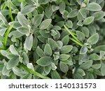 green leafs pattern background | Shutterstock . vector #1140131573