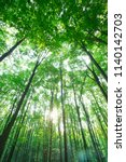 forest trees. nature green wood ... | Shutterstock . vector #1140142703