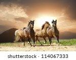 Stock photo horses in summer 114067333