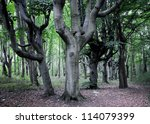 old beeches forest in Swinoujscie, Poland - stock photo