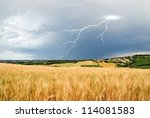 lightning over grain field in summer - stock photo