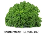 freshly harvested whole kale cabbage on a white background - stock photo