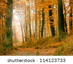autumn forest with path   Shutterstock . vector #114123733