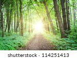 Sunset In Green Summer Forest