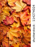 autumn background with maple leaves - stock photo