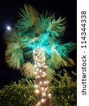 christmas palm tree - stock photo